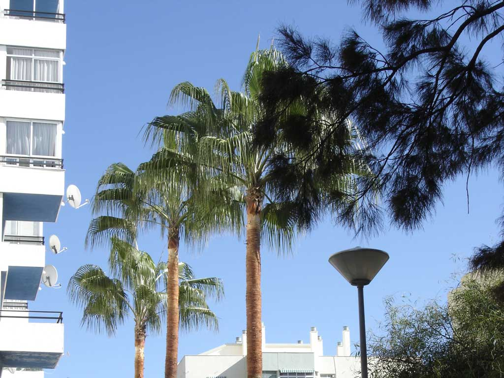 Palm trees and trees pruning marbella