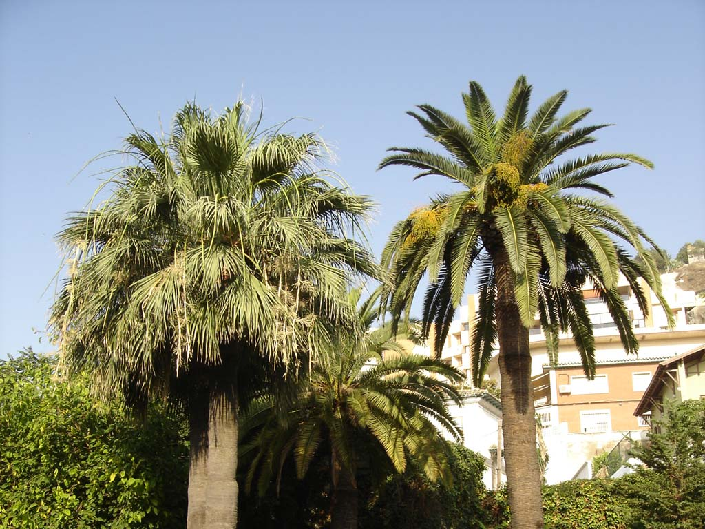 trees pruning marbella